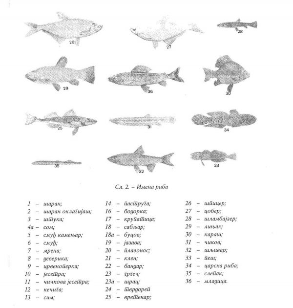 Types of fish in Belgrade hunting areas (Collected Works, Book 14) (Digital Legacy of Mihailo Petrović)